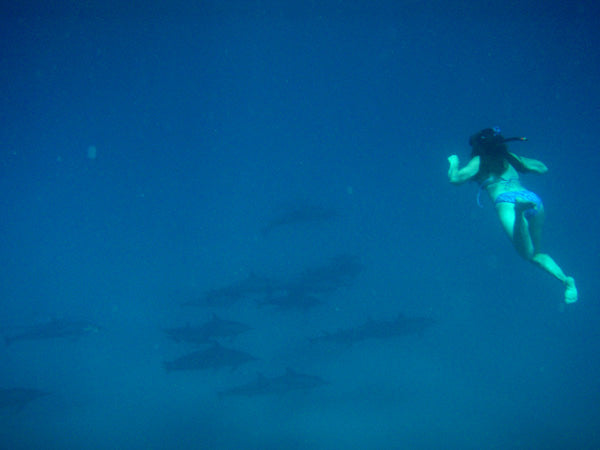 Hawai'i Artist Kelly Borsheim snorkling with spinner dolphins. Photo by Michael Seiler