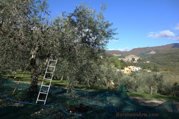 The Little Tuscan Olive Farm in Castelvecchio, Italy