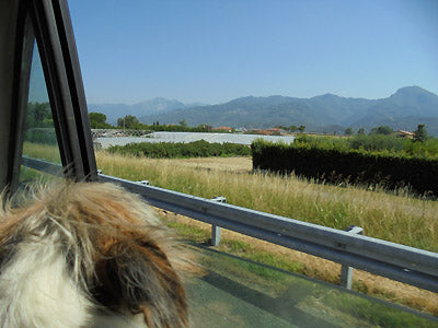 The dog and the artist get treated to a road trip to a bronze foundry in Pietrasanta, Italia