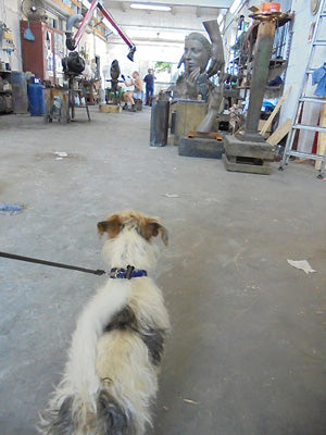 Gregory da Pisa, curious puppy dog in a foundry in Pietrasanta Italy