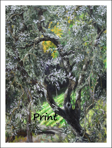 Olive Tree Art Garden in Tuscany Italy Curvy Olive Branches Outdoors Nature - Fine Art Print home or office Italy Leaves Tuscany