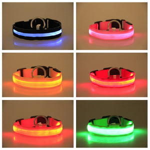 Collar LED Anti-Pérdida Recargable USB