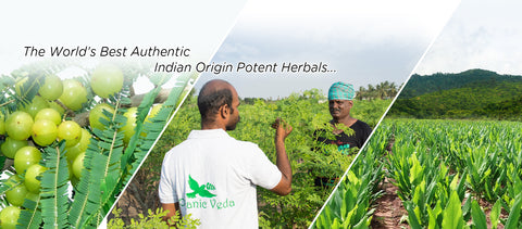 Organic Veda from AGF India