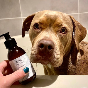 American bulldog with Wild For Dogs Shampoo