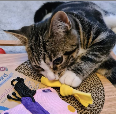 cat with eco toy