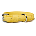Lemon Blast Collar