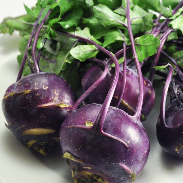 Phantassie Organic - Purple Kohlrabi (each)