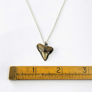 Fossil Shark Tooth Shadow Necklace