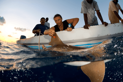 Dr. Rachel Graham and the Belize Shark Project