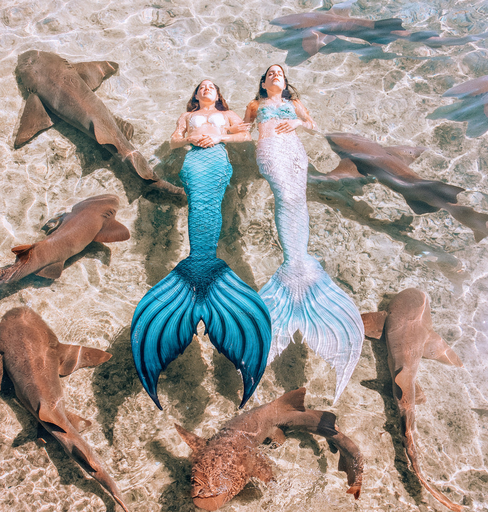 Kristina Sherk image of two mermaids with blue tail and white tail bull sharks in water