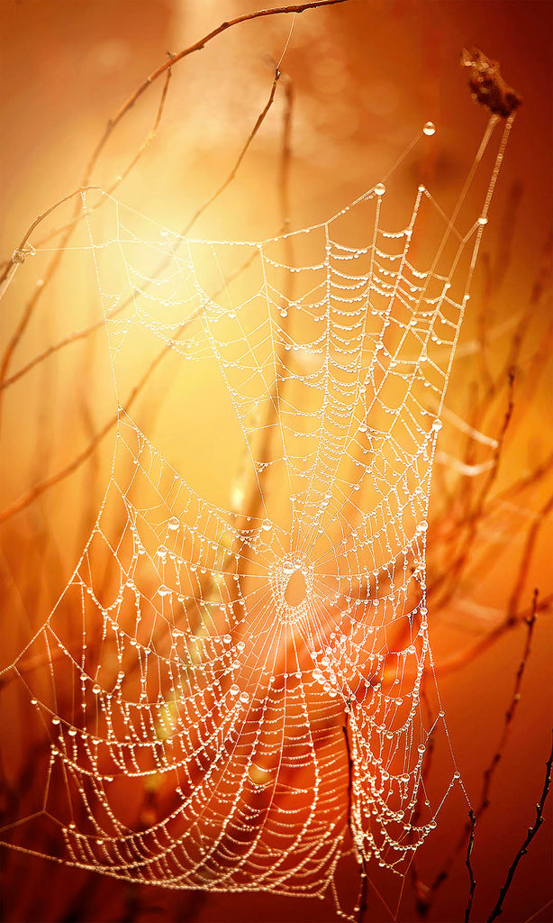 Michelle Valberg spider web golden sunlight