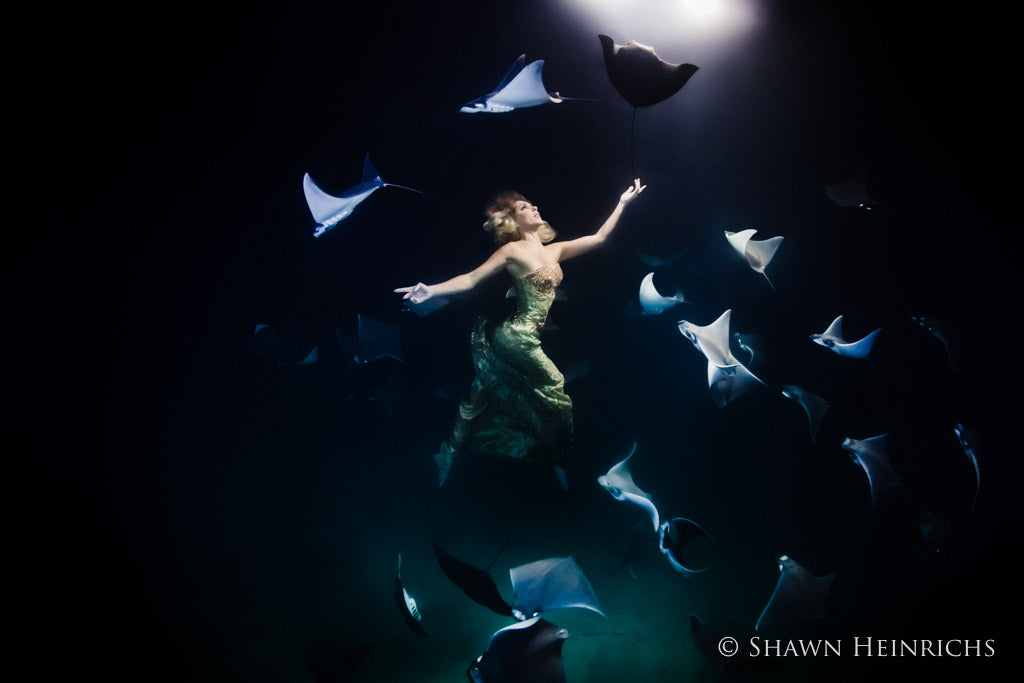 Shawn Heinrichs manta ray swimming with SCUBA diver with lights