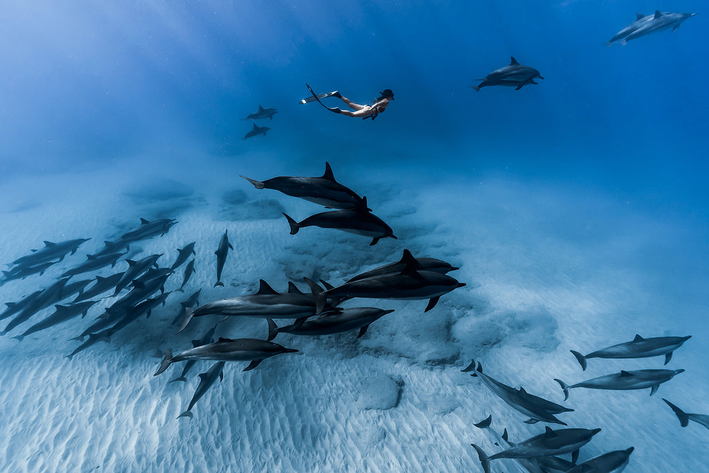 Terry Flanagan diver and pod of dolphins swimming near seafloor