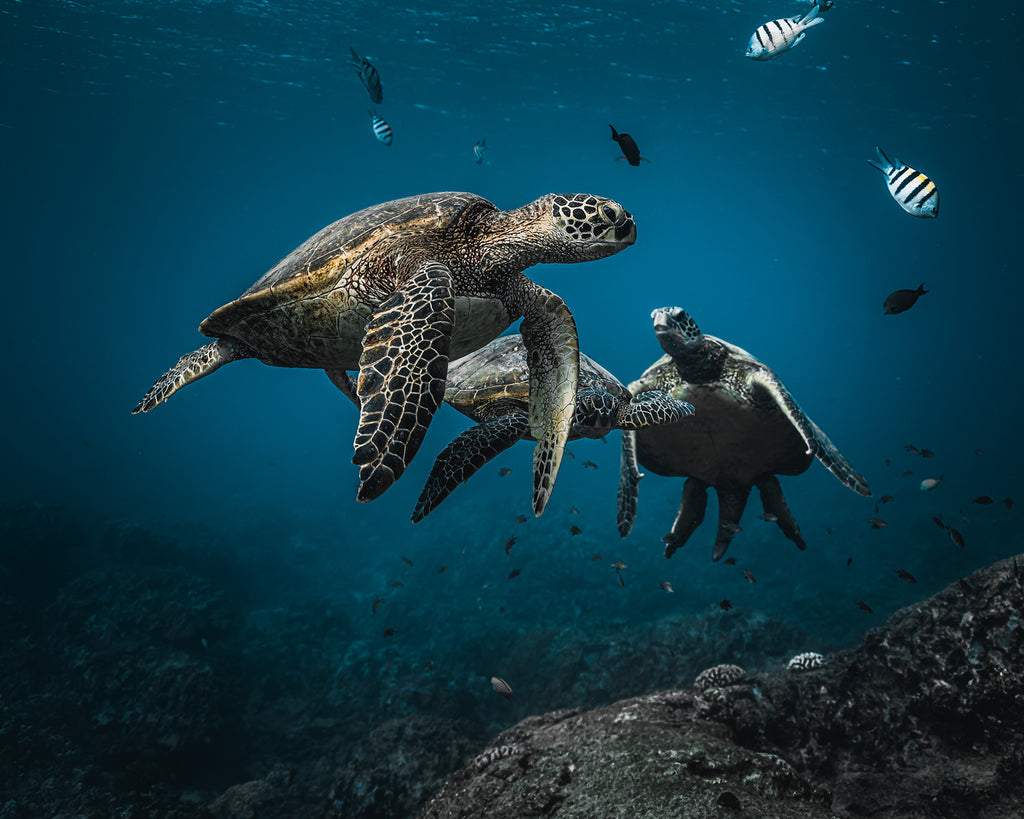 Terry Flanagan sea turtles swimming with fish
