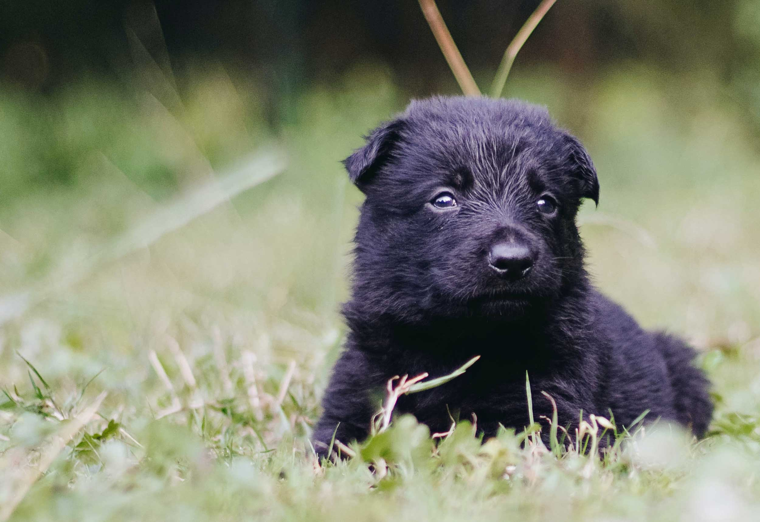 Five Basic Commands All Puppies Should Know