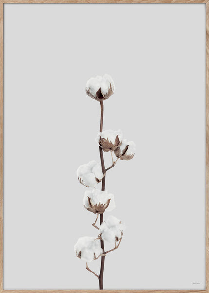 AFFICHE Cotton flower