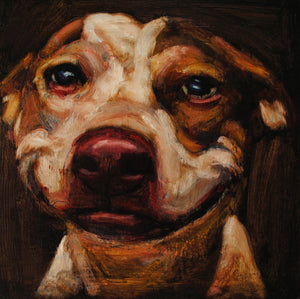 Donation-Katrina - An Act of Dog-Museum of Compassion