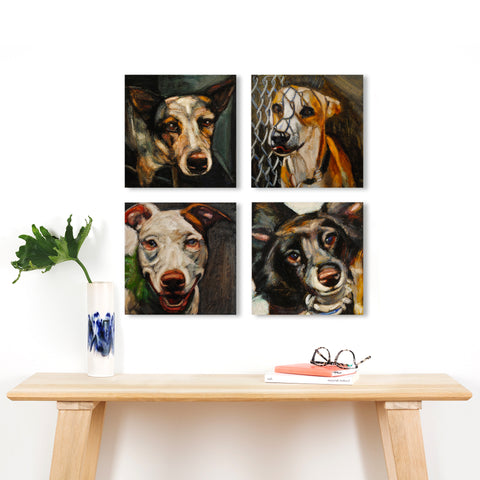 5500 Shelter Dog Portraits