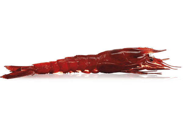 Load image into Gallery viewer, Red Carabineros Prawns - Qwehli Seafood