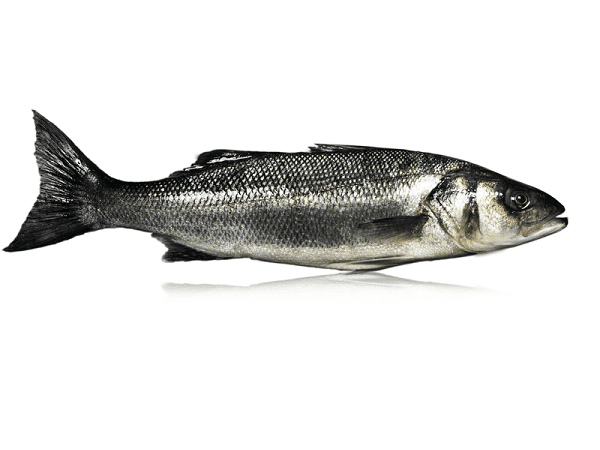 Load image into Gallery viewer, Whole Seabass (Gutted) - Qwehli Seafood