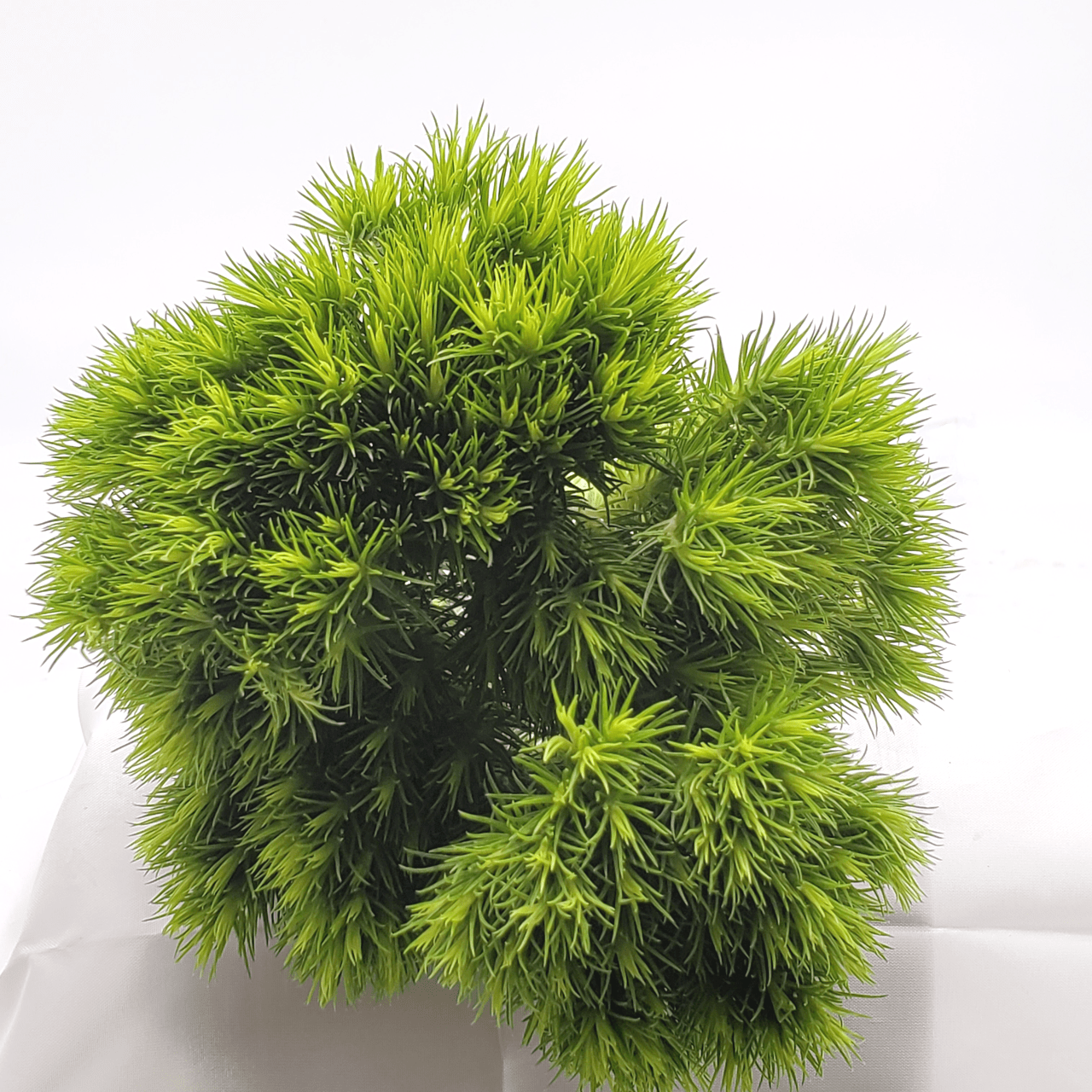 dianthus green wicky