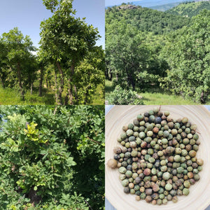 Green Oak Gallnuts | Whole