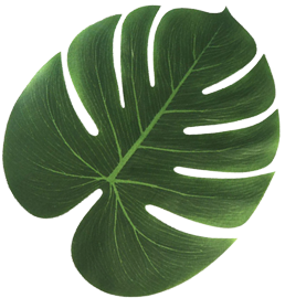 Tropical Palm Leaves | Hawaiian Beach Party Decorations ...
