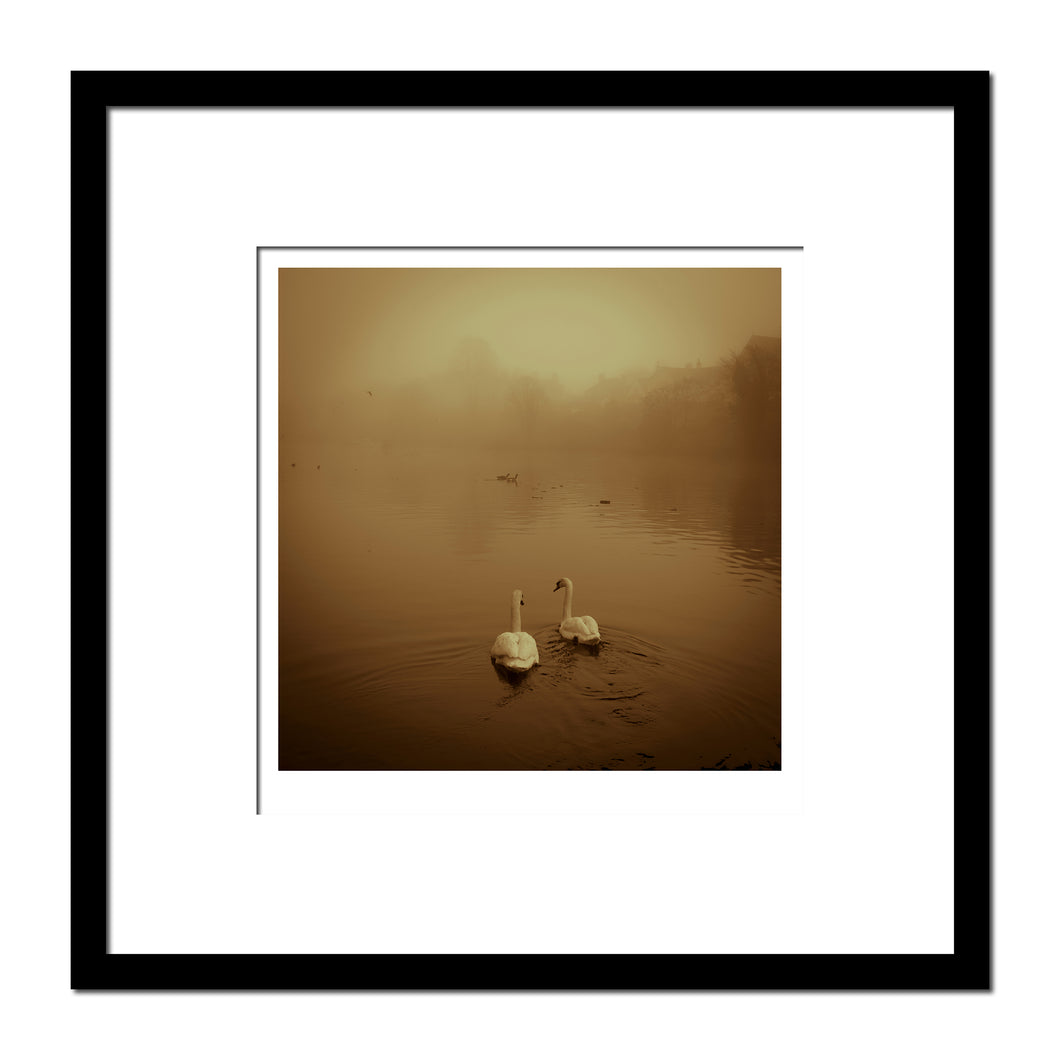 'Chester Fog, River Dee Swans' photographic Giclee print