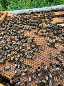 10 x Double Brood Nucs