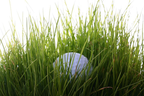 Golf ball lost in the grass.