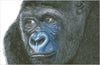 Close up zwarte gorilla diamond painting