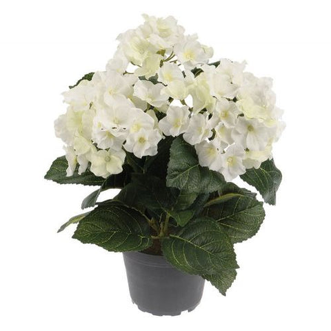 Hortensia in Pot - Susan Clark Interiors