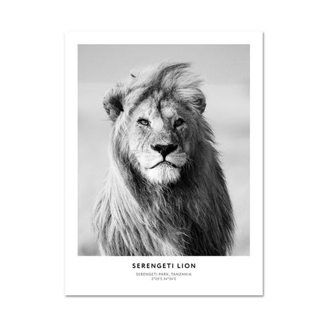 Lion Painting Black and White - 10X15cm No Frame / L464-2