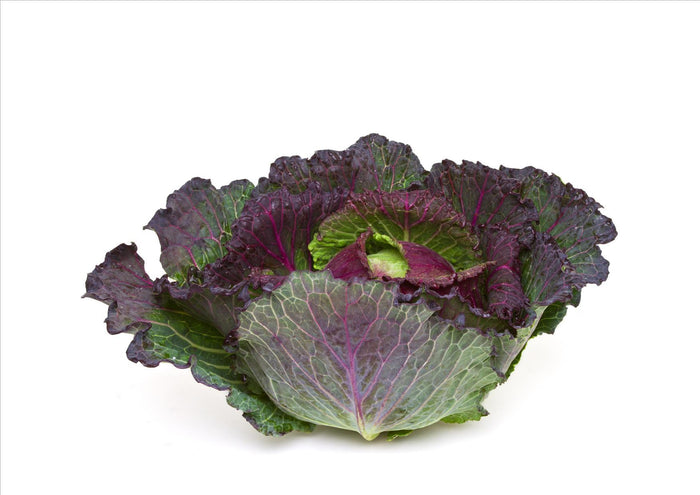 January King Cabbage (Each)