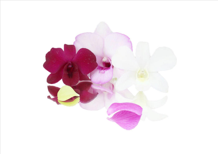 Flowers Edible Orchids (7-10 Flowers)
