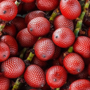 Aguaje fruit from the remote Peruvian Amazon Rainforest