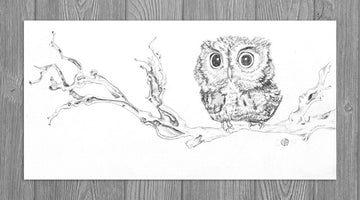 Little Owl on Branch
