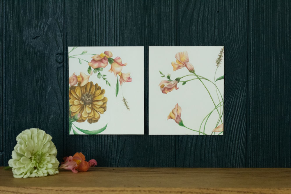 Snapdragons and Zinnia drawings by Courtney Hopkins