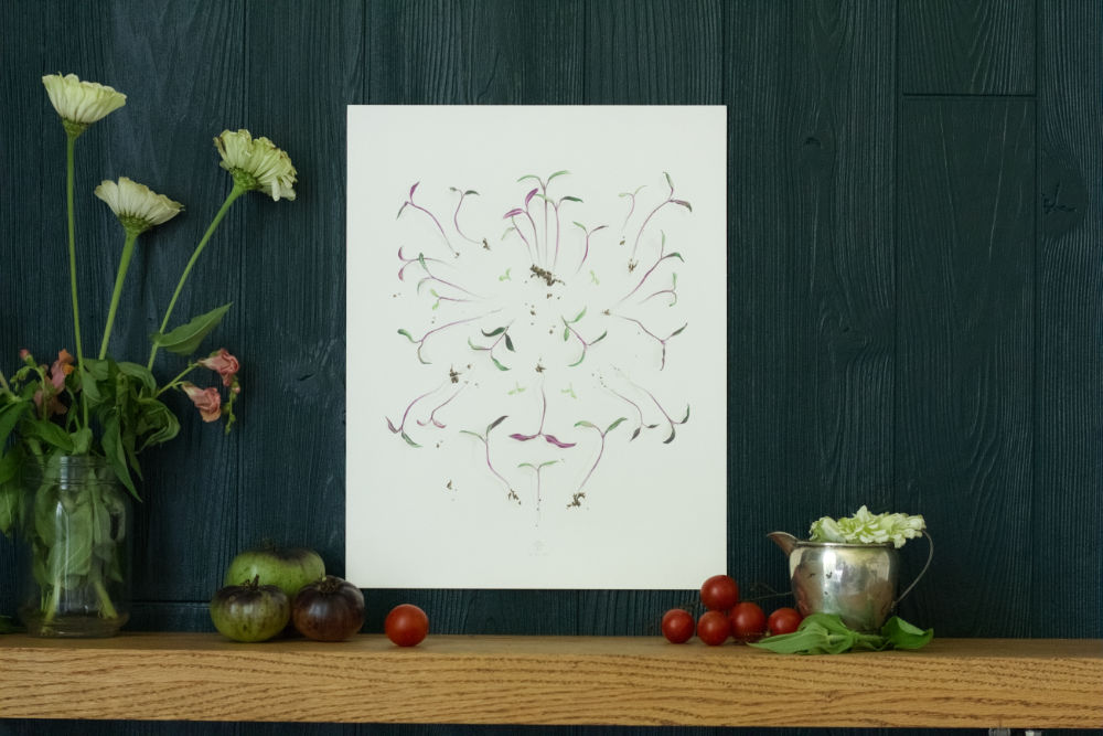 "Drawing called ""Freshly Plucked Sprouts"" by Courtney Hopkins"