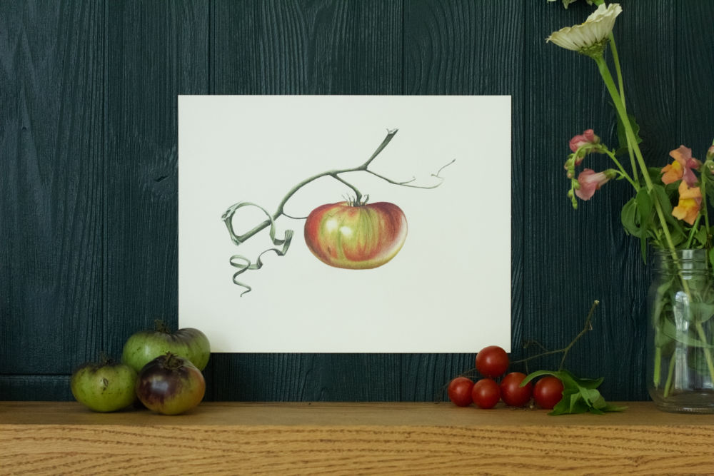 "tomato drawing called ""Ripening"" by Courtney Hopkins"