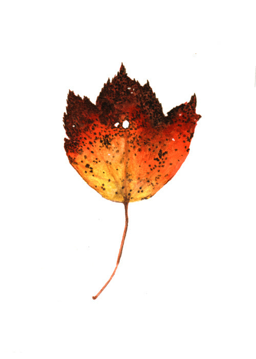 Autumn Leaf Study IV Original