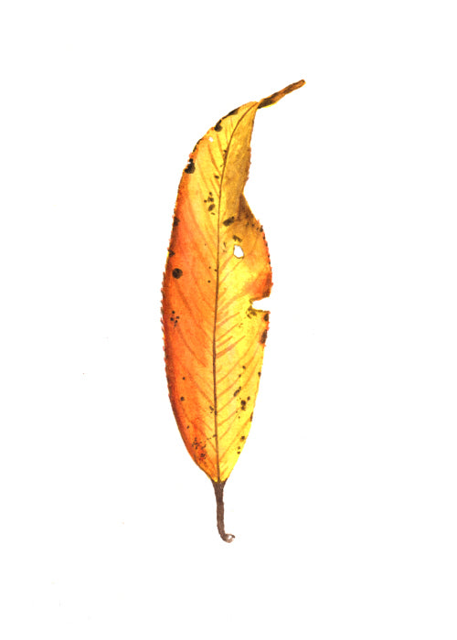 Autumn Leaf Study VI Original