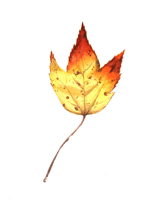 Autumn Leaf Study VIII Original