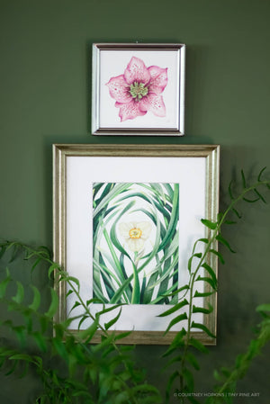 Hellebore Flower Specimen - Framed Original Drawing