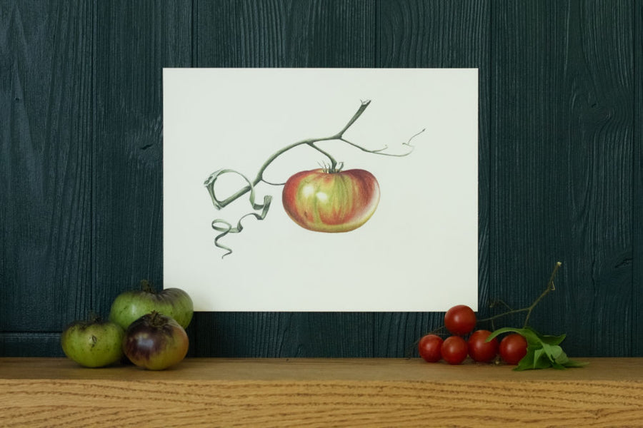 Ripening tomato art print on green background