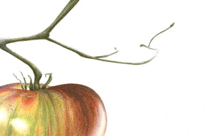 Ripening tomato art print close up