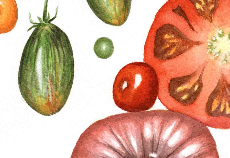 Summer Splendor tomatoes art print close up