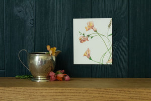 Sunlit Snapdragons drawing on green background with shelf