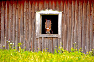 spring cleaning in your horse barn