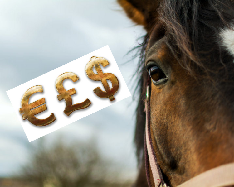 Things To Keep In Mind When Choosing A Horse To Lease
